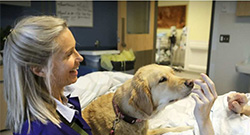 With Grace: Volunteer dogs help 'break the sadness spell' in palliative care
